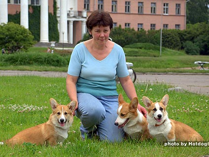Welsh corgi pembroke Kennel ALFAWISH